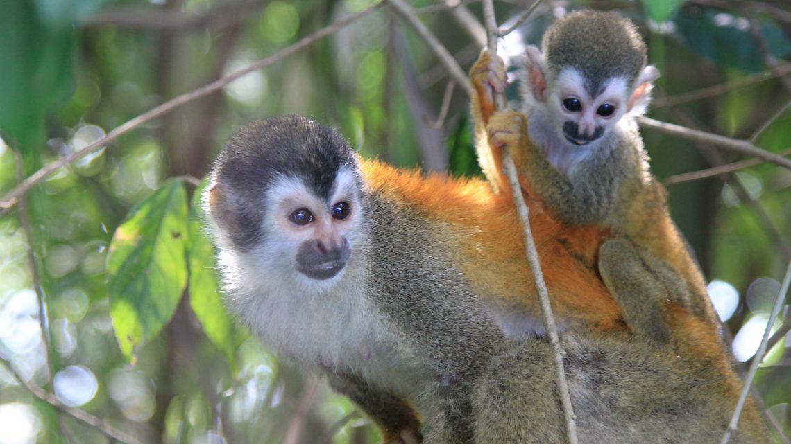 Vidéo – Episode 19 – Pura vida Costa Rica !